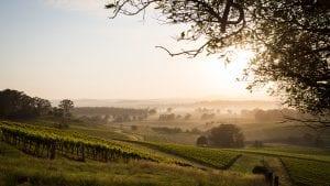 hunter valley-wine