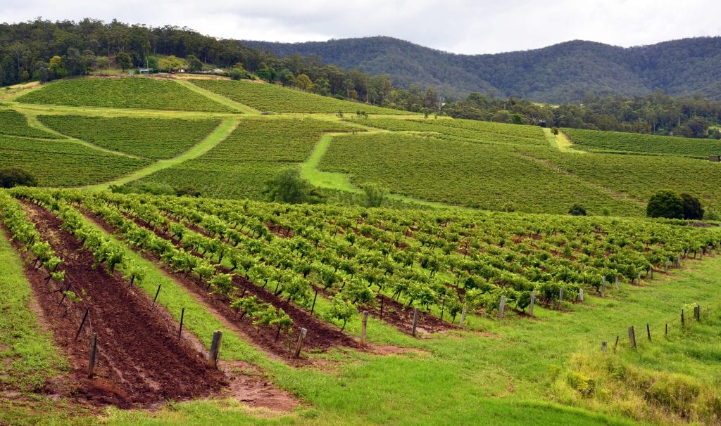 Explore the Hunter Valley and its wines from Pokolbin