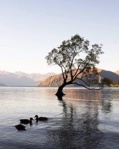 Wanaka-tree-lake