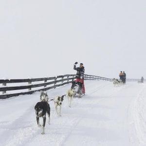 Wanaka-snow