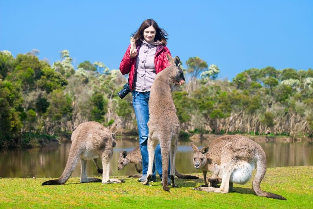 Woman feeding kangaroos