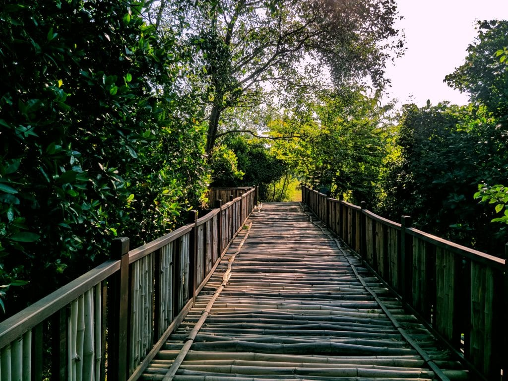 Wonorejo mangrove boardwalk